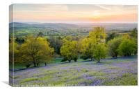 Malvern hills bluebells at the sunset, Canvas Print