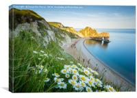 Durdle door and daisies, Canvas Print