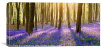 Bluebells panorama, Canvas Print
