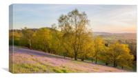 Bluebells on the hill, Canvas Print
