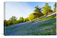 Bluebells on the Malvern Hills, Canvas Print