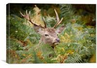 Red Deer in bracken, Canvas Print