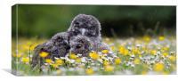 Cute owl chicks in rain, Canvas Print