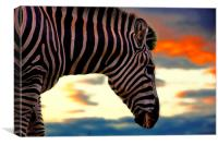 zebra at sunset, Canvas Print
