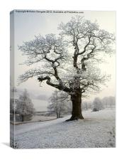 Hoar Frost in Chatsworth Park, Canvas Print