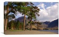 Buttermere Pines and High Crag