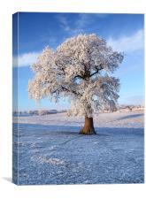 Frozen Winter Tree, Canvas Print