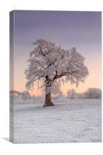 Frosty Tree Sunrise, Canvas Print