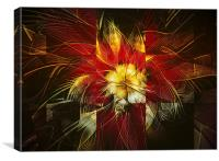 Poinsettia, Canvas Print