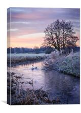 Swans on the Tas, Canvas Print