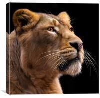 Lioness 2, Canvas Print