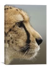 Cheetah profile, Canvas Print