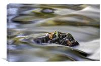 Autumn River Rock, Canvas Print