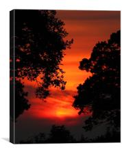 Sunset Between The trees, Canvas Print