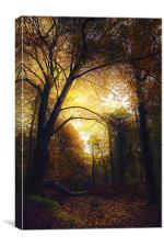 Autumn Glow in The Forest, Canvas Print