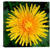 Big Yellow Flower, Canvas Print