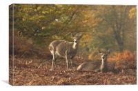 Deer at Knole Park, Canvas Print