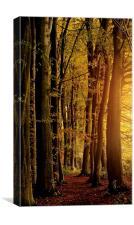 Woodland glow , Canvas Print