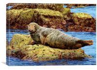 Seal, Canvas Print