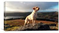 Dartmoor Conqueror, Canvas Print
