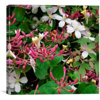 Honeysuckle and Clematis, Canvas Print