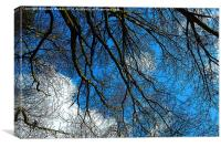 Blue Sky and Branches, Canvas Print