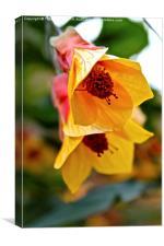 Kentish Belle Flower, Canvas Print
