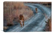 Lioness and Cub, Canvas Print