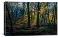 Autumn woodland sunrise, Canvas Print