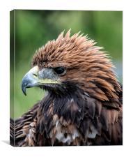 Golden Eagle Crest, Canvas Print