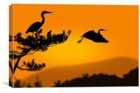 herons at sunset, Canvas Print