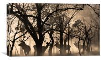 four deer , Canvas Print