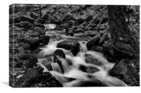 Black Forest Creek, Canvas Print