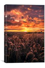 Red evening, Canvas Print