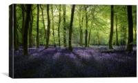 Spring Bluebell Woods, Canvas Print
