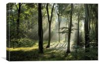Woodland Summer Light, Canvas Print