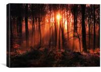 Woodland Sunrise, Canvas Print