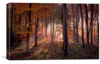 Golden Autumn Light, Canvas Print