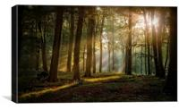 Late Summer Woods, Canvas Print