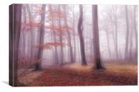 Foggy Woods, Canvas Print