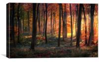 Woodland Golden Dawn, Canvas Print