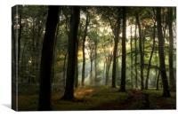 Summer Light in Beech Woodlands, Canvas Print