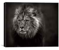 The Old Lion, Canvas Print