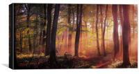 Morning Woodland Light, Canvas Print