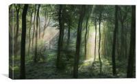 Summer Woodland Light, Canvas Print