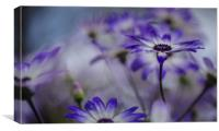Senetti Flowers, Canvas Print