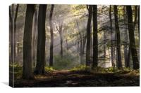 October Morning Woodlands, Canvas Print
