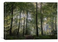Morning Woodlands, Canvas Print