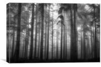 Pine Woodlands, Canvas Print