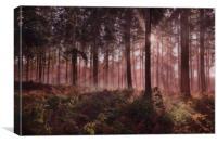 Forest Dawn, Canvas Print